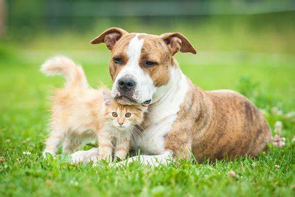 hundehaltung  der mietwohnung tierschutz tierhaltung