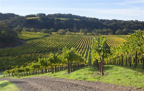 Day Tripping Touring California's Lesserknown Wine