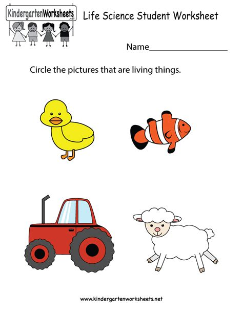 kindergarten science student worksheet printable science worksheets and more science