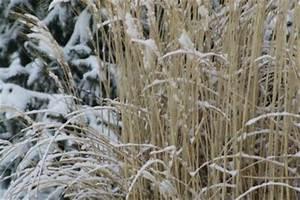 Wann Schneidet Man Gräser : ziergras berwintern wann ist das sinnvoll ~ Frokenaadalensverden.com Haus und Dekorationen