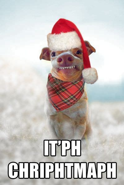 Funny Merry Christmas Meme - 89 best lisp meme dog images on pinterest tuna melts doggies and funny dogs