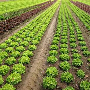 Organic: Methods Of Organic Farming