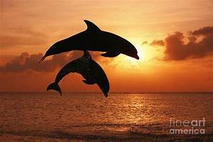 inspirational photo of two Bottlenose Dolphins leaping ...