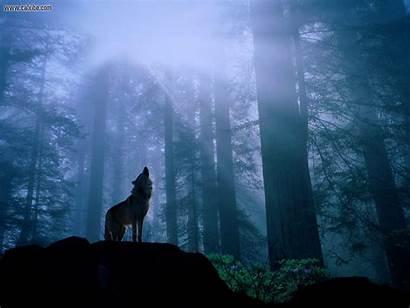Wolf Nature Howl Warming Gray Nights Spirit
