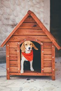 A visual guide on how to build a dog house in 8 simple steps for Charleston dog house