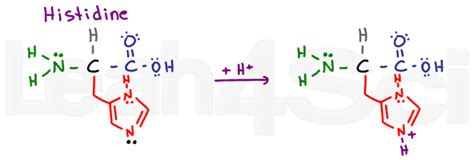 Understanding Amino Acid Side Chain Characteristics For