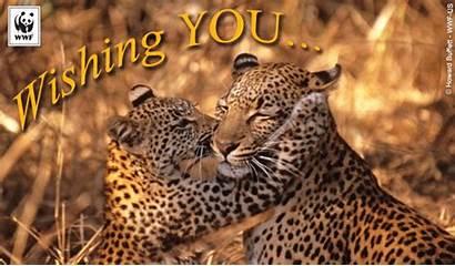 Thanksgiving Wwf Wildlife Fund Animated Ecards Worldwildlife