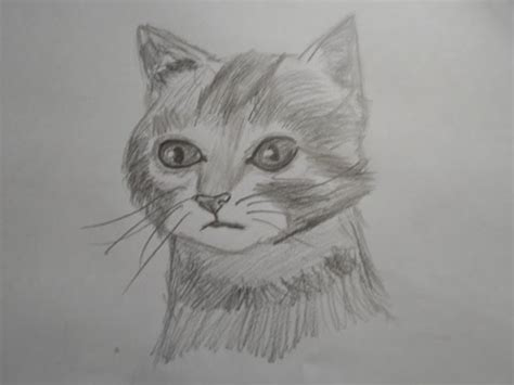 draw  realistic cat speed drawing narrated