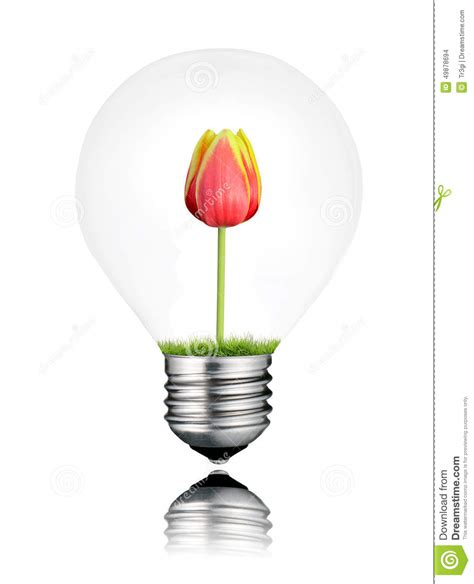 light bulb with tulip flower growing inside isolated