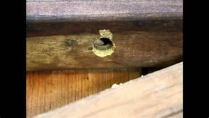 Carpenter Bee Damage Repair