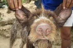 Real Human Animal Hybrid   Glimmer: Crossbreed- this was ...