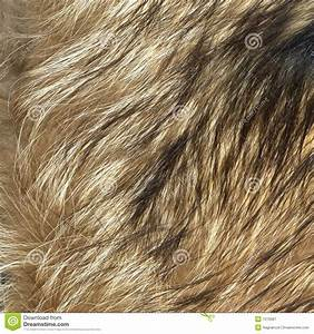 Wolf Fur Texture To Background Stock Image - Image: 7513587