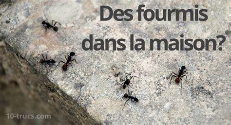 comment se debarrasser des fourmis dans maison fourmis dans la maison 10 trucs pour s en d 233 barrasser 10 trucs