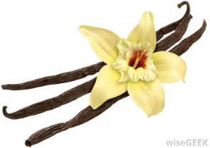 white orchid flower what is vanilla with pictures