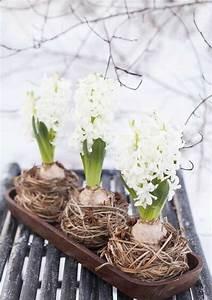 les jacinthes comme decoration de printemps With tapis chambre bébé avec fleurs a bulbe amaryllis