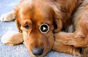 3 éve nem látta gazdáját ez a kutya. Elképesztő az első ...