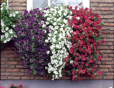 cascading flowers for window boxes trees window boxes and madagascar on pinterest