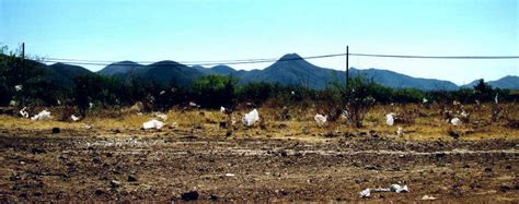 stay   plastic bag law bisbee tells state attorney