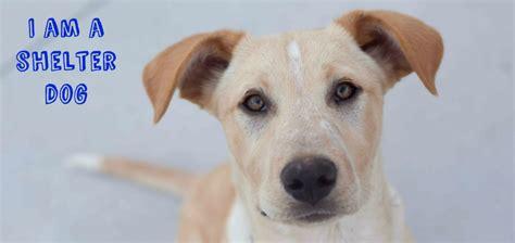 shelter dog georgian triangle humane society