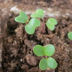 Faire Germer Des Graines De Poivrons : comment semer des graines de fleurs ~ Melissatoandfro.com Idées de Décoration