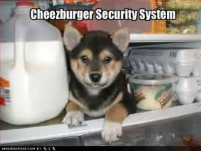 German Shepherd Puppies Cute Funny Quotes