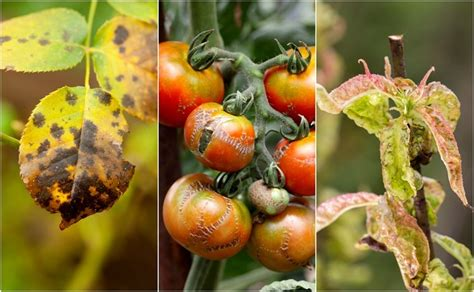 7 Common Plant Diseases To Watch Out For & How To Fix Them