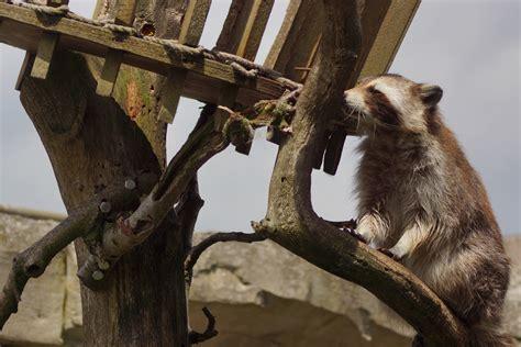 photo workshop animal photography  zoo  meer