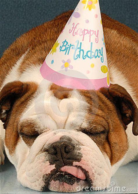 birthday bulldog stock  image