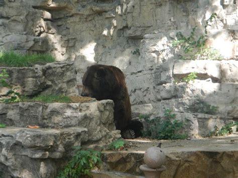 Picture Of St. Louis Zoo, Saint Louis