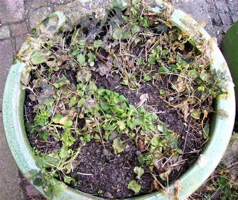 Garten Rat Pflanzen Vor Schuetzen by Pflanzen Im Garten Vor Sch 252 Tzen Industrieverband Agrar