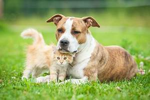 Unterhalt Im Trennungsjahr Berechnen : hund scheidung ~ Themetempest.com Abrechnung