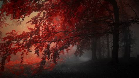autumn trees in the forest hd aesthetic
