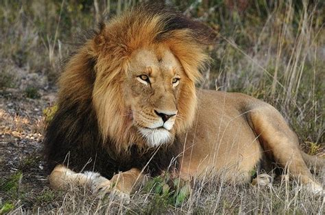 Wildlife Conservation Course-one Year Field Guide Training