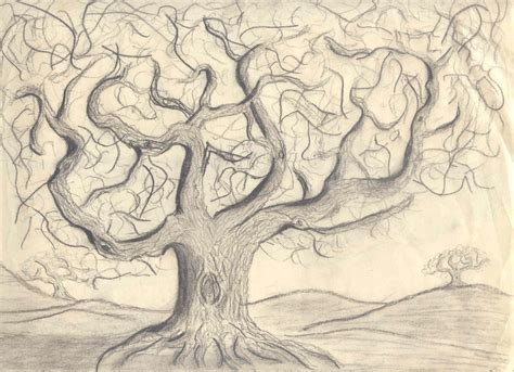 Oak Tree Drawing By 14 Year Old Rip Rense Picture To Pin