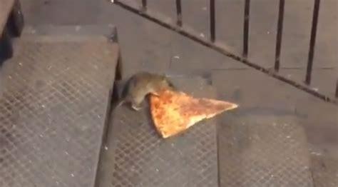 big cheese pizza rat filmed dragging pizza slice
