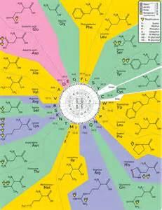 DNA Amino Acid Codon