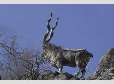 National Animal Of Norway Markhor 123Countriescom