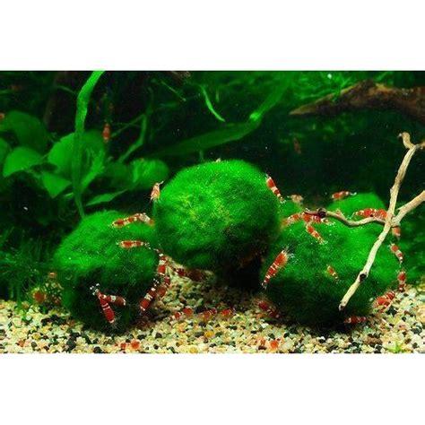 plantes d aquarium pas cher ou d occasion l achat vente garanti