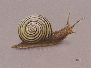 Snail by Lars Furtwaengler | Colored Pencil / Pastel ...