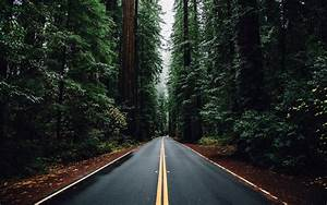 Nature, Forest, Trees, Road, Wallpapers, Hd, Desktop, And, Mobile, Backgrounds