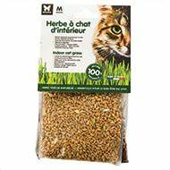 Graine Herbe A Chat : herbe chat bio et non bio cataire pour chat ~ Melissatoandfro.com Idées de Décoration