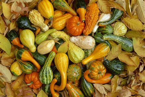 October in the Garden: Regional Gardening Guide for October