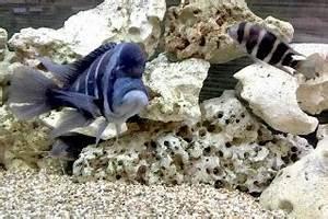 Aquarium Ohne Wasserwechsel : ein aquarium ohne pflanzen ist dies berhaupt m glich ~ Eleganceandgraceweddings.com Haus und Dekorationen
