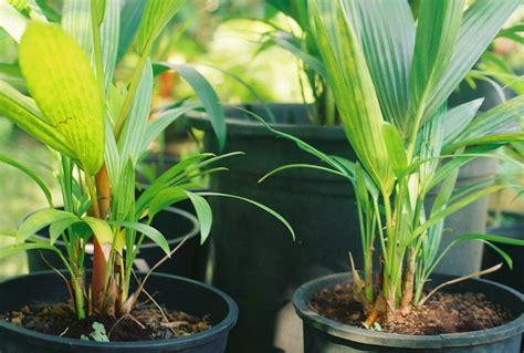 EduPomar: Fruto, Flores, Aromas & Cores: Março 2014