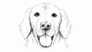 How to draw Labrador Dog - YouTube