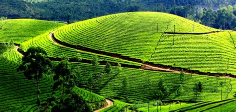ooty  package  mysore travel holiday trip