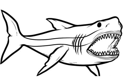 draw  shark  kids step  step tutorial