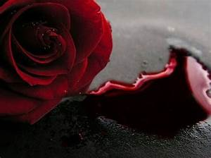 Blood rose | Dark/ Art/ Weird | Pinterest