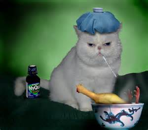 can cats get colds can cats get humans sick