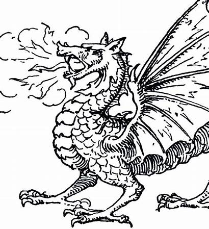 Dragon Clip Clipart Fairy Graphics Dragons Medieval